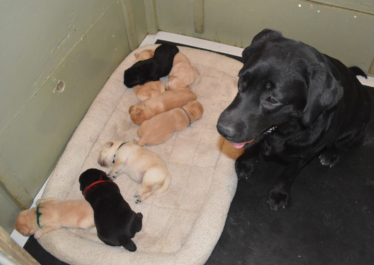 Miranda with her puppies