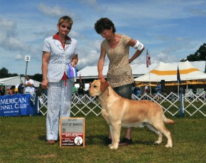 This picture is of Dany at 16 mos winning his first US Major. In fact this was his first time out as an adult in the US and he was WD/BOW Sat/Sun at Ballston Spa supported entries. Thank you to Mary Ann Cherwinski as this first win gave us the confidence to pursue Dany's championship owner/handled. He did this finishing with limited showing in style, all handled by the Labradale/Highcaliber team.