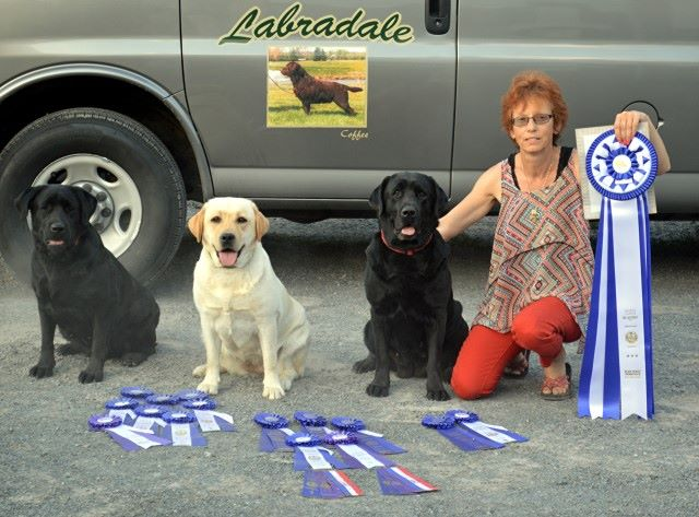 Miranda, Rebel and Shot after successful weekend in Obedience, Rally and Show. What a memorable weekend it was!