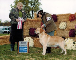 Breeder Judge Specialty Win for Dany of Highcaliber Kennels