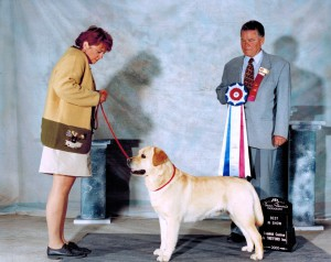 Pictured receiving one of his two back-to-back Best in Shows, from respected all-rounder Merlin (Van) Van de Kinder .