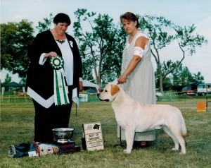 Pictured going Best of Opposite at the 1999 Labrador Retriever Club of Canada specialty. Liane owner/handed Sage to this prestigious honor, awarded by Mary Weiss (Beechcroft).